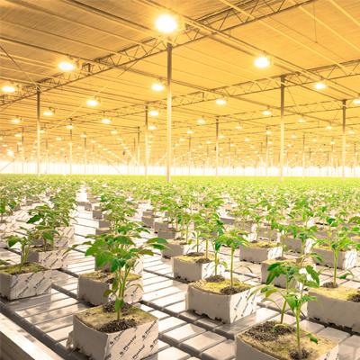 Сельское хозяйствоМини-ТЭЦ позволяет снизить затраты на освещение теплиц в 2 раза, а в холодное время года сократить затраты на отопление до 70%