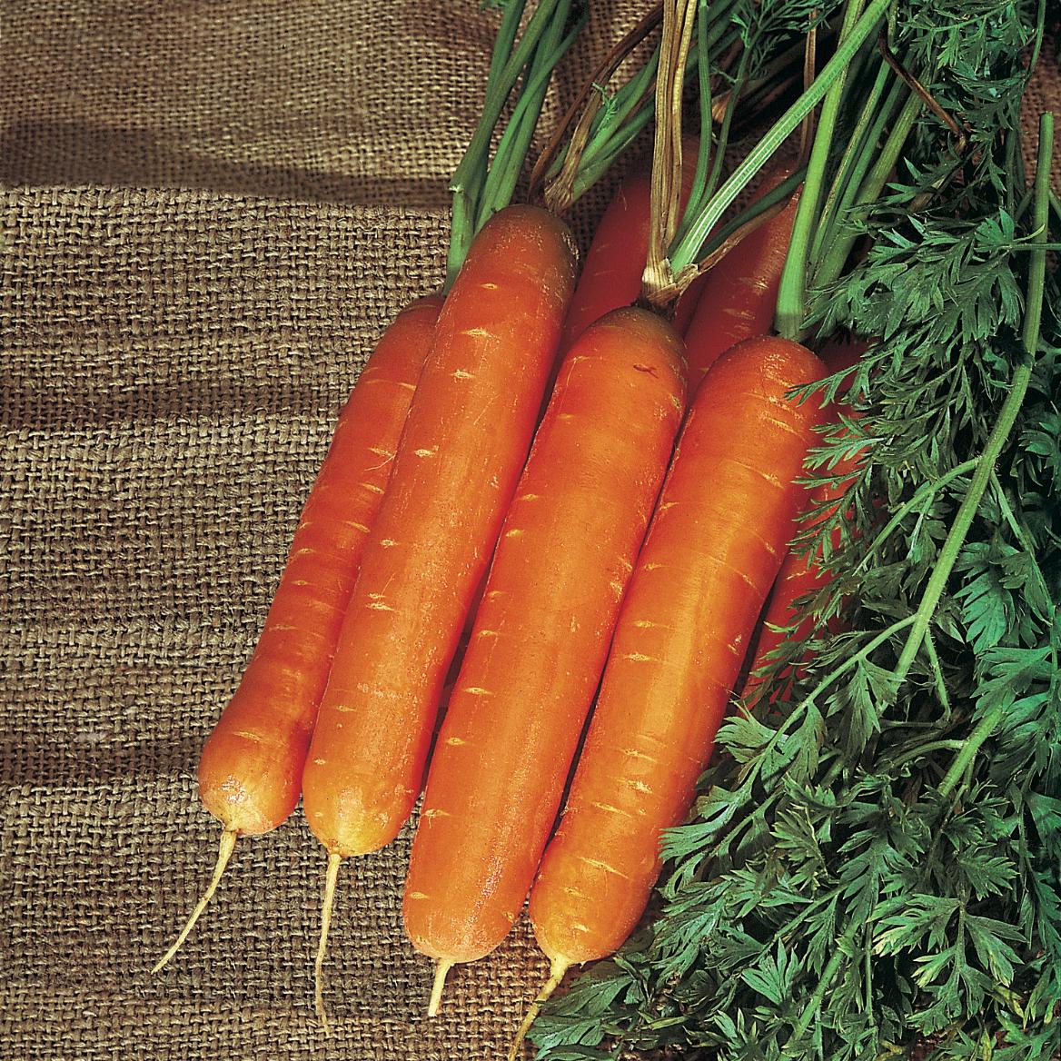 морковьБЕРЛИКУМ