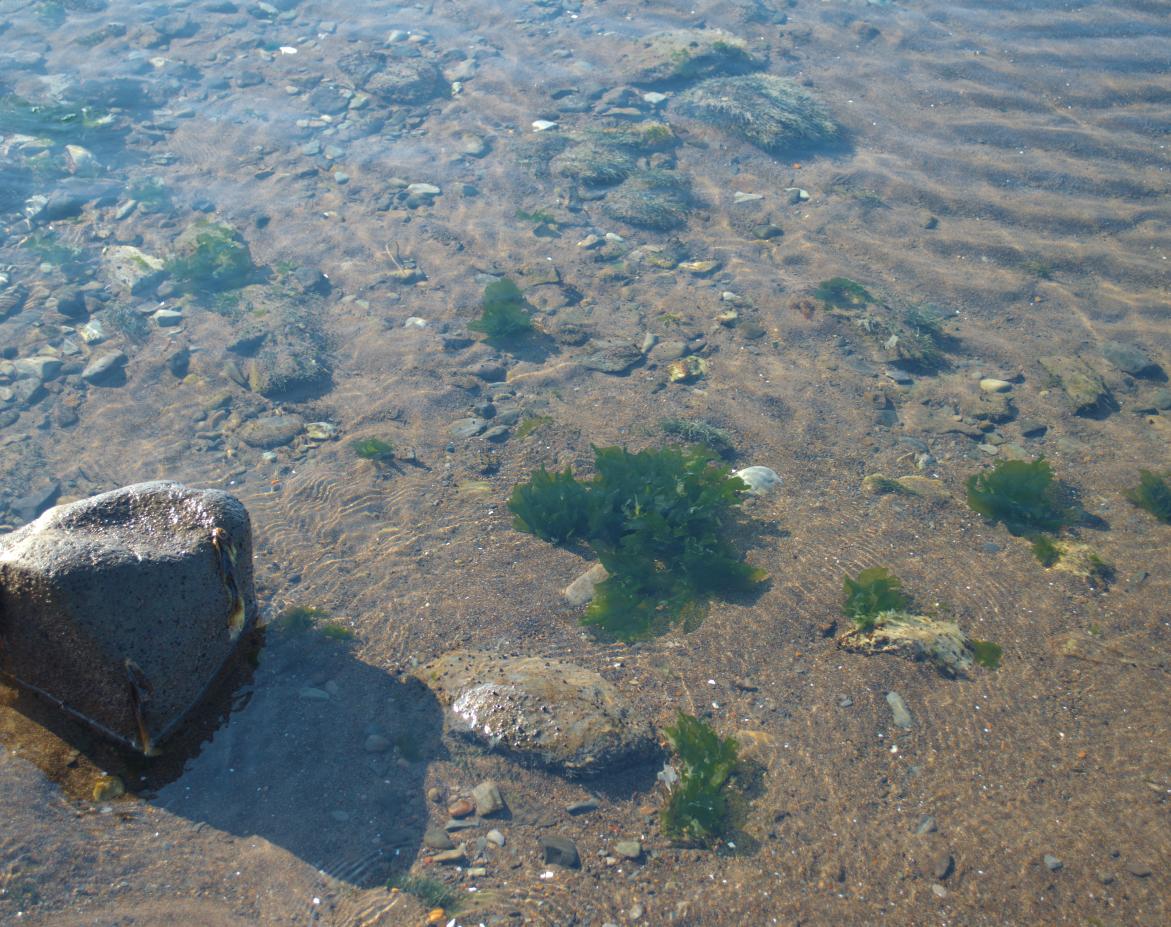 Чистое мореЕсЕстественная среда обитания морского ежае
