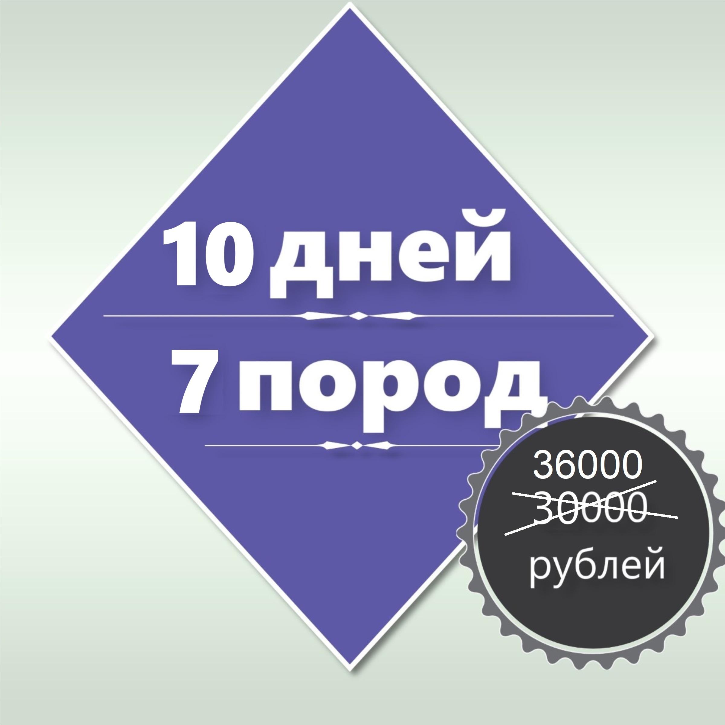 10-дневный курс «Основы груминга»