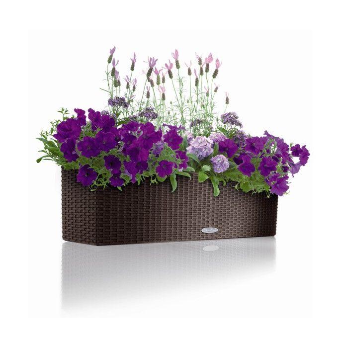 Живые растенияЦветы в красивом горшке - это отличное украшение интерьера, которые улучшают экологическую обстановку в доме, насыщает воздух кислородом, аэроионами, озоном, повышает влажность воздуха Выбирая нас, Вы получаете прекрасное растение по лучшей цене:фиалка от 200 руб., шефлера 70 см 600 руб., спатифиллум Шопен 750 руб. и др.
