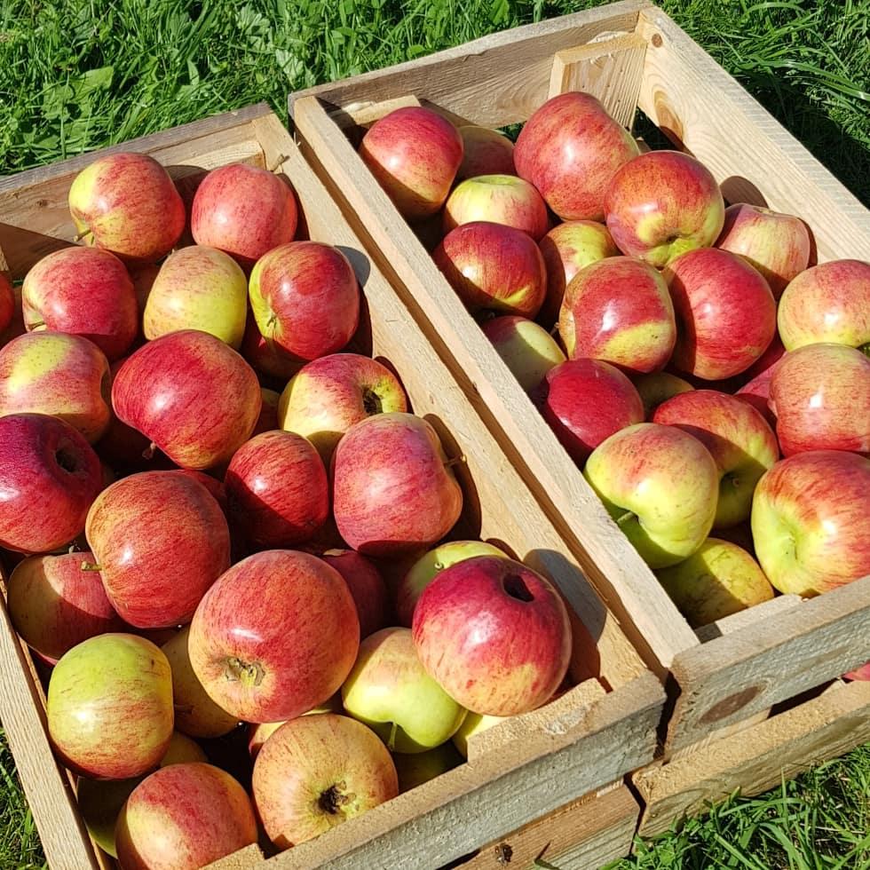 ящики яблок картинки как новых