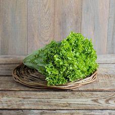Салат листовой