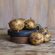 Картофель белый нового урожая