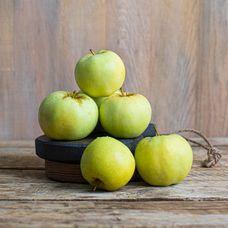 Яблоки «Антоновка»