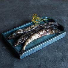 Ледяная рыба охлаждённая