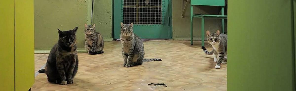 В Петербурге появился Союз музейных котов