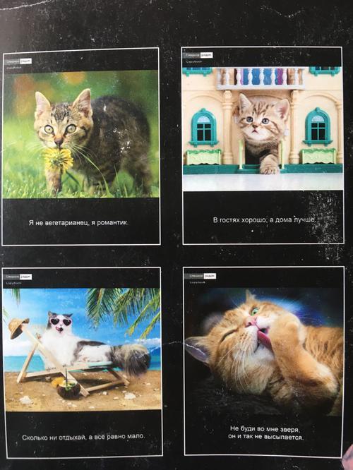 Тетрадь демотиваторы с кошками
