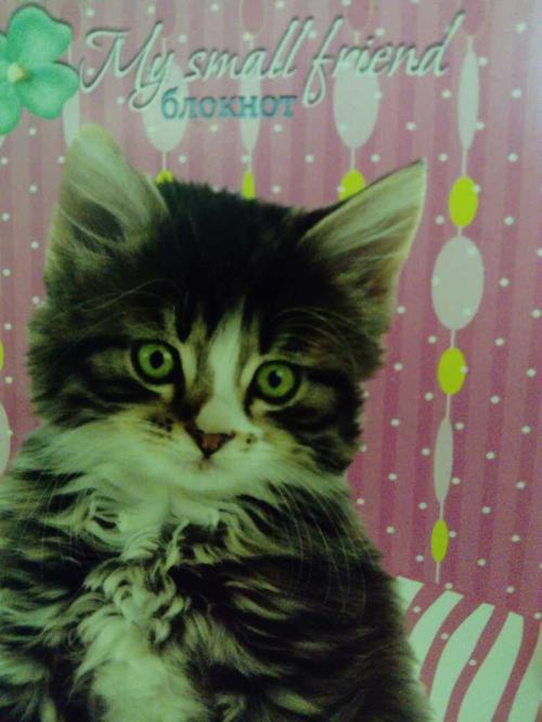 Блокнот. Серия: Мой маленький котенок.