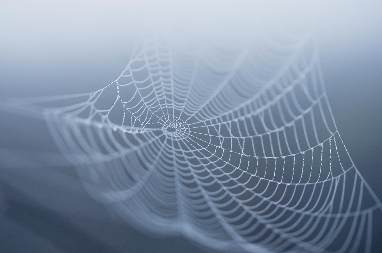 «Стратегия паутины»: что делать, если ключевые сотрудники бегут из компании