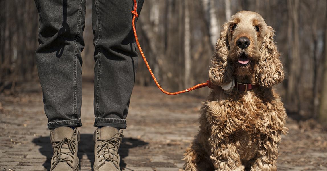 «Собака-гуляка»: как превратить прогулки с собаками в технологичный бизнес (и научить людей убирать собачьи какашки)