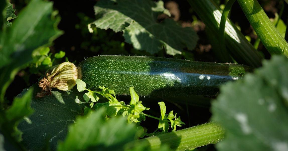 История Cece's Veggie Co.: как кухонные эксперименты ибезглютеновая диета помогли создать бизнес на$25 млн