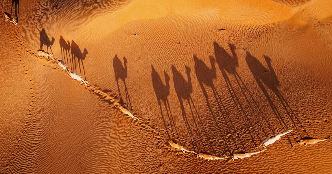 Почему сейчас компании лучше быть «верблюдом», чем «единорогом»