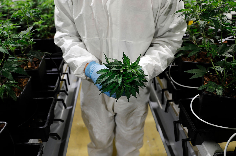 Фонд Снуп Догга собрал $100 млн для инвестиций в марихуановые стартапы