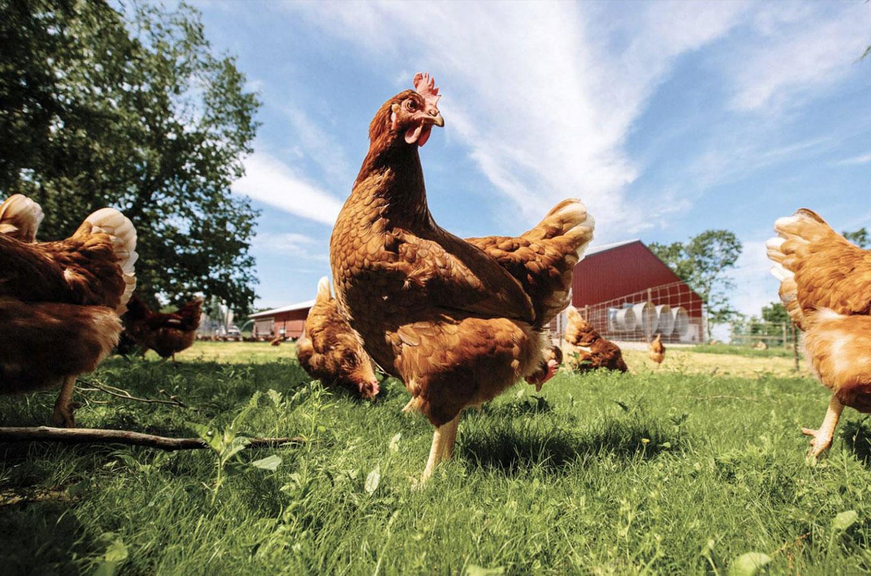 Миллиарды на яйцах. Как экологичная компания убедила фермеров лучше заботиться онесушках ибольше зарабатывать