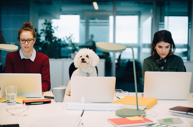 Как оценивать эффективность сотрудников иправильно ихувольнять