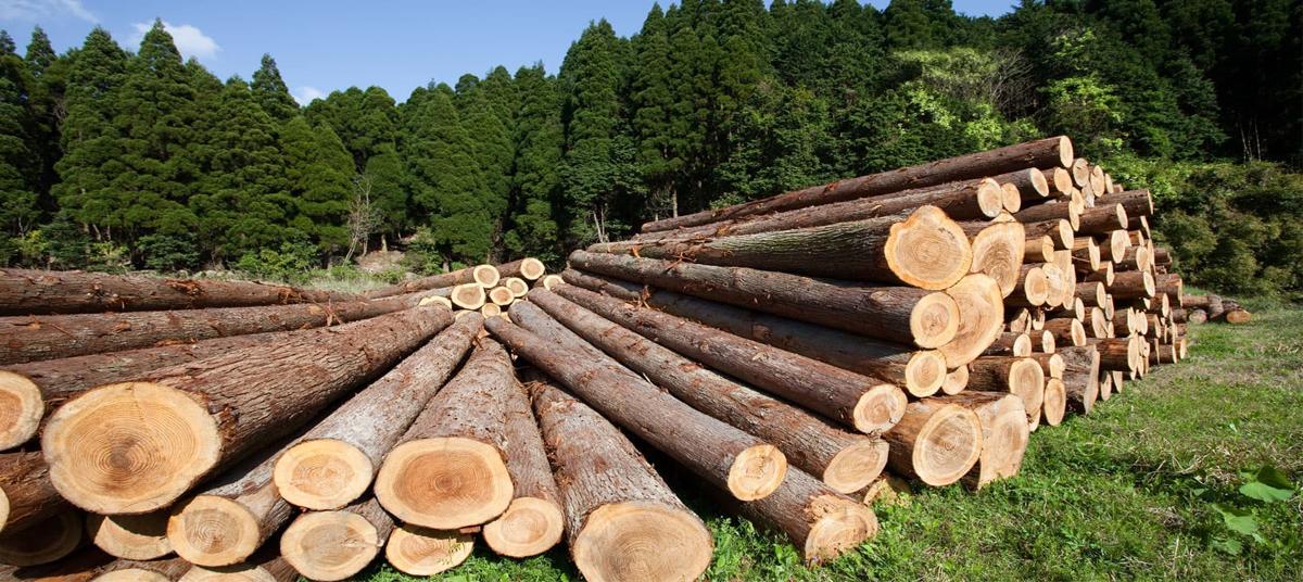 Экспорт древесины