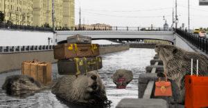 Бобров-москвичей переселят из центра в Новую Москву