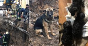 В Печатниках добровольцы спасли щенков, которые едва не погибли на стройке