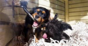 В Госдуме предложили запретить продажу животных в зоомагазинах и на рынках