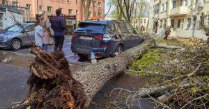Из-за сильного ветра падают деревья: бьются машины, есть пострадавшие