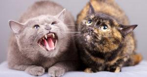 Москвича приговорили к году колонии за убийство кота и кошки