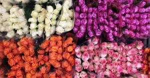 Из сквера у Киевского вокзала хотят сделать цветочный базар