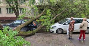 Поваленные деревья, перевернутые остановки — первая майская гроза оказалась с характером