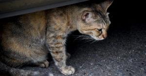 В Орехово-Борисово пенсионерка выбросила из окна 15 кошек