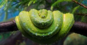 В зоопарке открылся новый павильон с экзотическими змеями