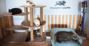 В «Артплее» установили котодом, откуда можно взять кошку из приюта