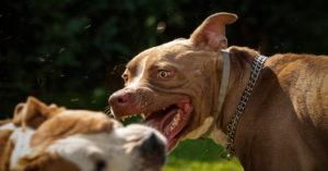 В «Музеоне» на пожилую женщину напали собаки без намордников