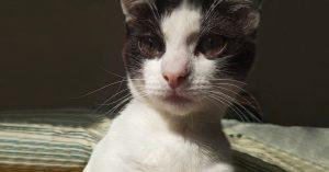 Кот выдвинулся в президенты Бирюлево