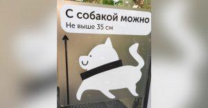 Во «ВкусВилл» теперь можно с собакой, если она меньше 35 см