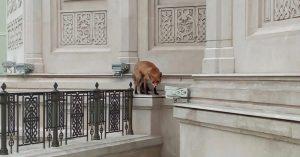 Сегодня весь день прихожан Сретенского монастыря терроризировала лиса