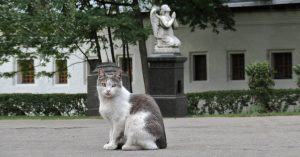 Из Новодевичьего монастыря выселяют котов
