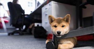 Треть москвичей хотели бы ходить на работу с собакой