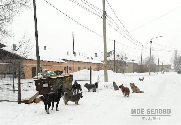 Стая бродячих собак на улице Железнодорожной в Белово