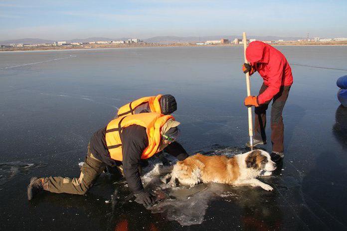 В Забайкальском крае спасли вмерзшую хвостом и задними лапами в лёд собаку