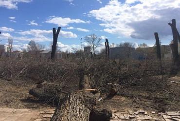 Чтоб не завязли в старых вязах. Власть Балакова объяснилась по поводу масштабного спила деревьев в детском парке. Видео