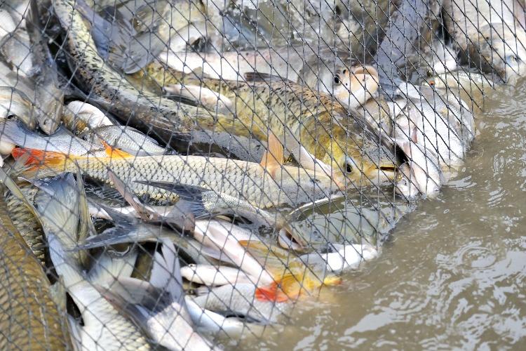 Полицейские пресекли ловлю рыбы сетью