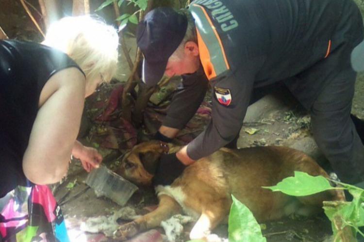 Спасатели вытащили собаку из коллектора
