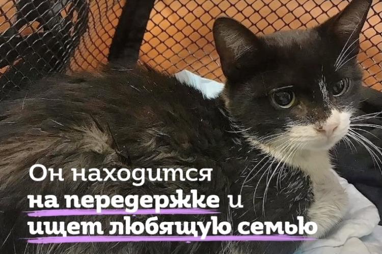 Женщина спасла сбитого котенка от смерти. Видео