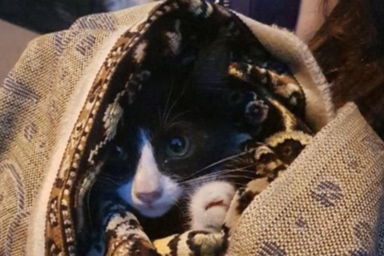 Помогли чем смогли. Два депутата и глава Балакова спасли котенка