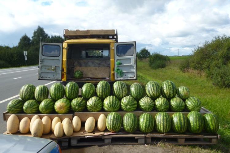 В Балакове незаконно торговали арбузами, дынями и овощами