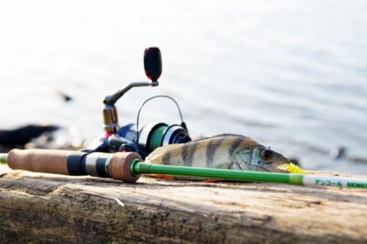 Не пропусти Турнир по спортивному рыболовству