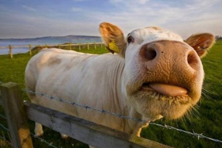 Балаковцев оштрафовали за безнадзорный выпас скота и за свалки