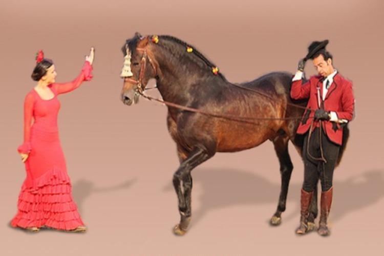 Посети конное шоу Испанские мотивы
