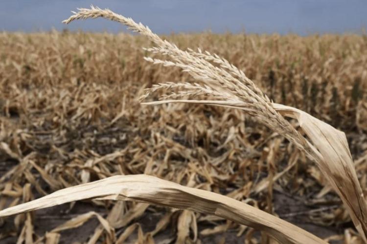 Балаковским сельхозпроизводителям зададут неудобные вопросы