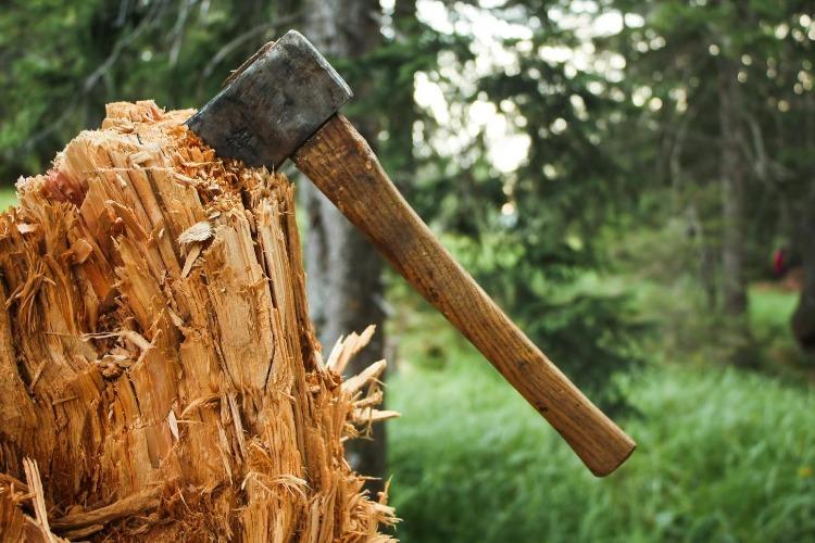 Балаковцы незаконно вырубили 12 дубов на банные веники